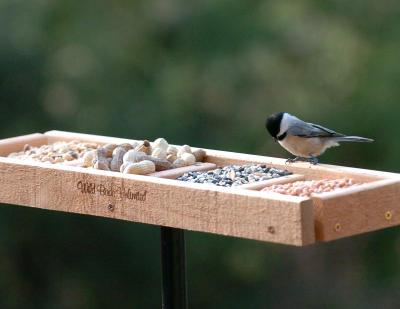 Bird Feeder Trays Tray Feeders Allow Birds to